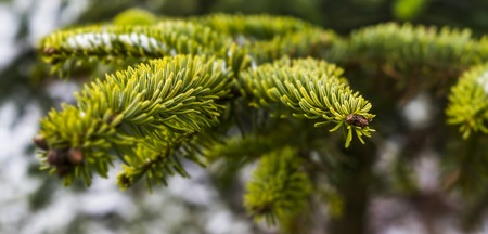 tree-3010103_1920